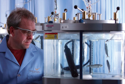 PNNL researcher John Stephenson observing juvenile chinook salmon inside of a hyper/hypobaric chamber used to expose fish to simulated pressure changes associated with turbine passage.