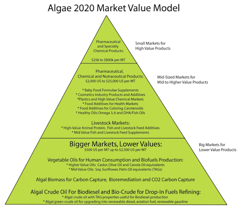 algae2020-4