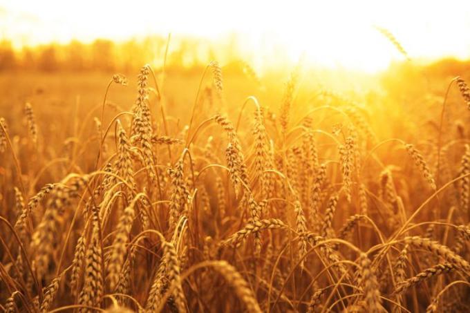 Kharif and Rabi crops provide balance picking up the slacks