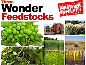 Whatever Happened to Jatropha, and All Those Other Wonder Feedstocks? Part 3