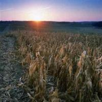 US Ethanol Industry Eyes Valero's Bid for VeraSun