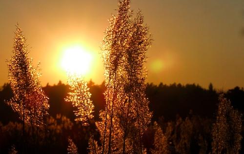 The Summer of Sun: Mid-Year 2016 Solar Insights