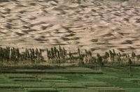 Greening Deserts for Carbon Credits