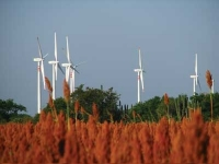 The Growing State of Wind Power in Latin America