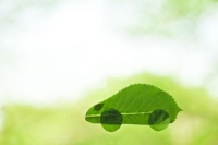 Why Businesses Win by Investing in Hybrid Vehicles
