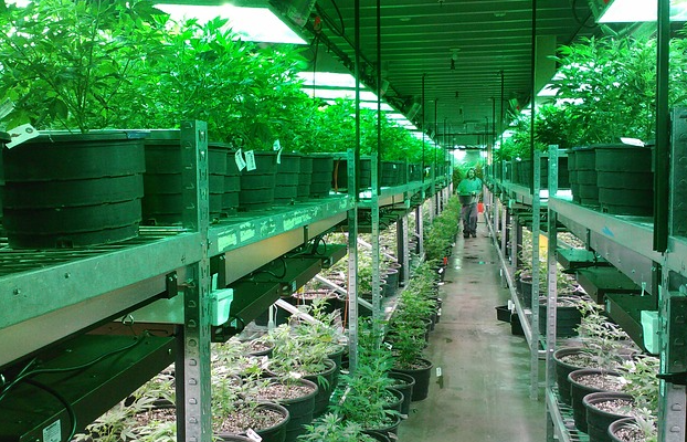 Greening the Not-So-Green Cannabis Industry
